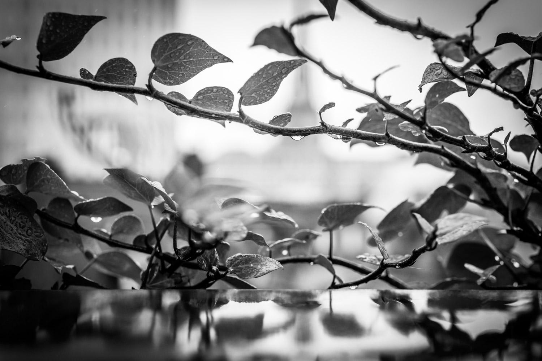Graham Hunt photography-6