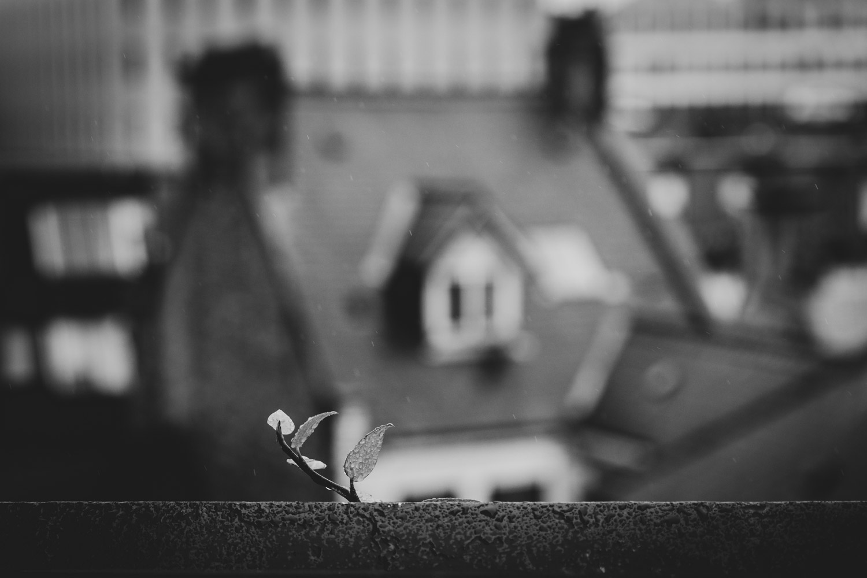 Graham Hunt photography-49