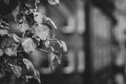 Graham Hunt photography-2