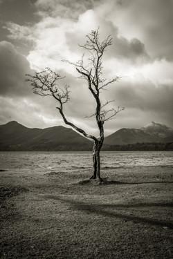 2 Derwent Tree