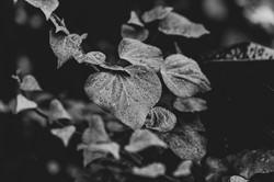 Graham Hunt photography-50