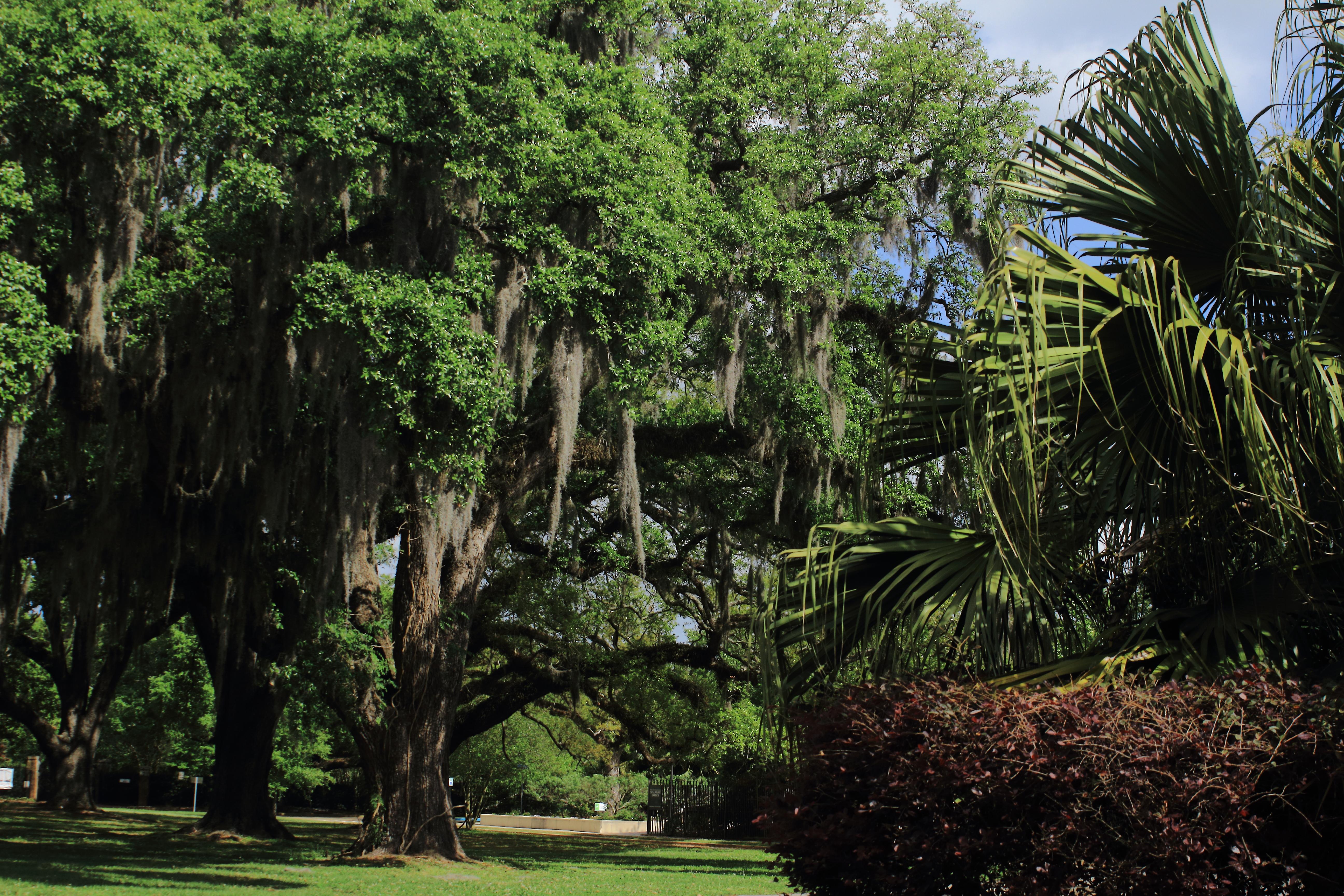 New Orleans - Garden