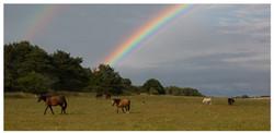 Regenbogen Pferde Jens Ch. Häger