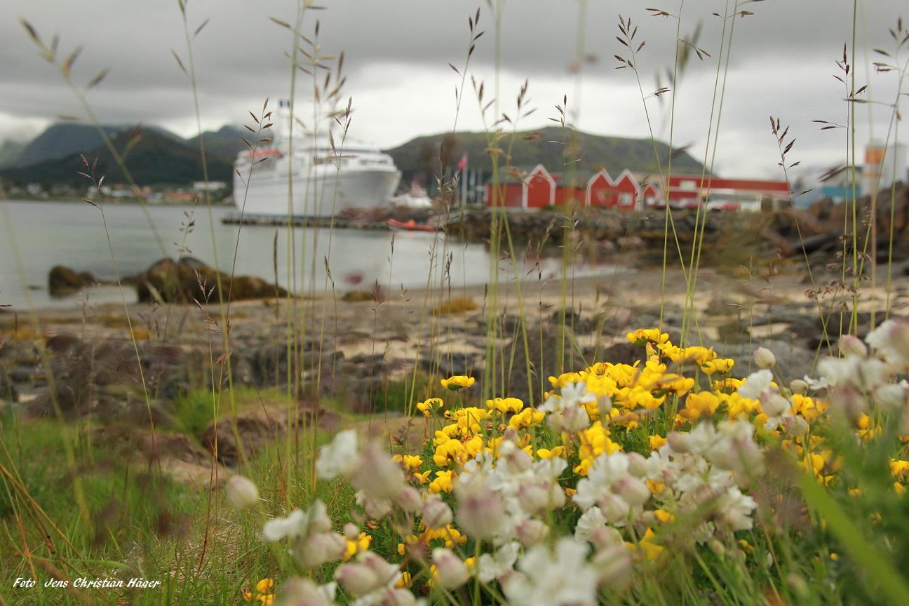 Hafen der Lofoten - Norwegen