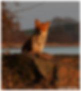 Fuchs-rand.jpg