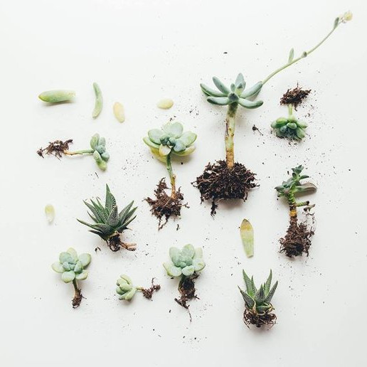 Succulent Bar // Make + Take Event