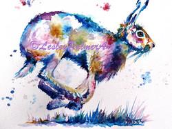 Hot Potato Hare