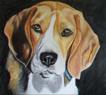 Bax the beagle