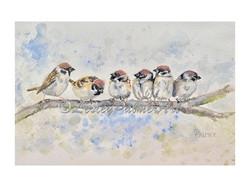 Sparrow party