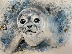 'Selma the Seal pup'
