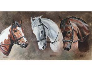 A life of horses