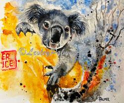 Koala's Keeper