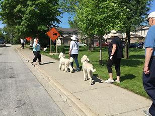 Dog Training Oakville Snappy Reactive 23.JPG