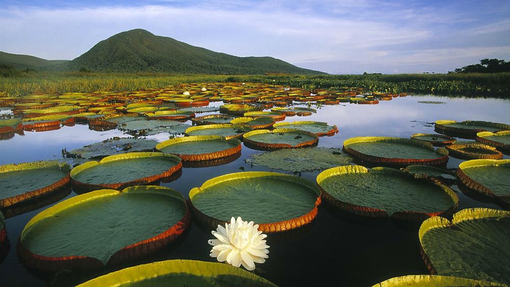 Pantanal Sulakları