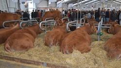 Sommet de l'élevage de Clermont- Ferrand : l'Afrique invitée spéciale