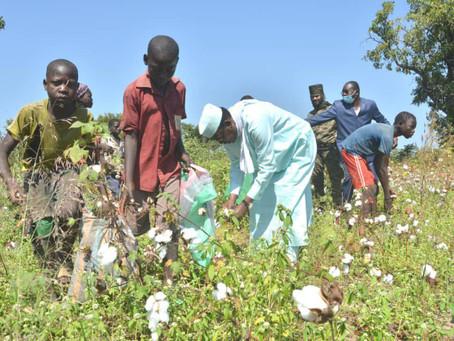 Tchad : le maréchal Idriss Deby Itno en visite dans un champ de coton à Kemata
