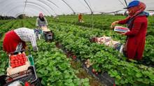 Maroc / Espagne : la fracture diplomatique entre les pays s'élargit au secteur agricole