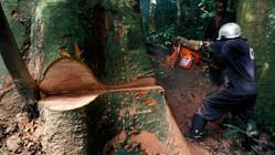 Forêts : Pour une exploitation responsable