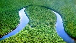 Brazzaville va abriter une rencontre sur la préservation des forêts