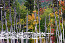 Autumn leaves and reeds_2009-09-27-11