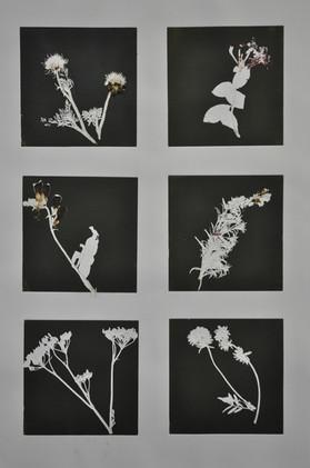 2017 fera flores II 65x85cm mono prints