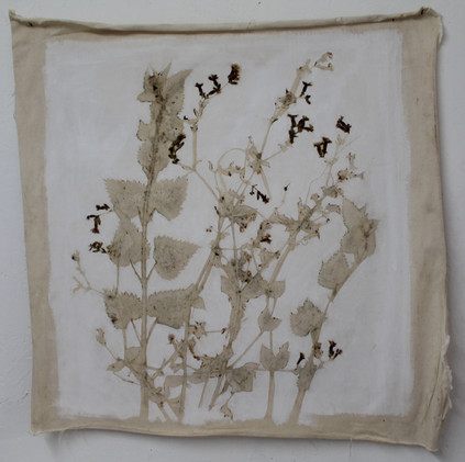 2018 Naturae II 75x75 cm flora on unstre