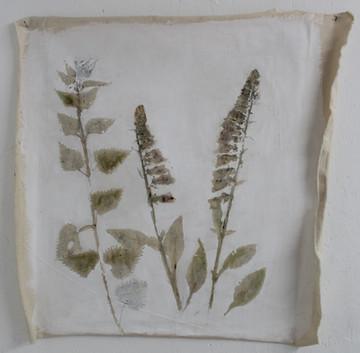 2018 Naturae III 75x75 cm flora on unstr