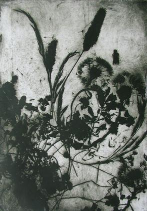 2017 floris Insecta 35x45cm photo etchin