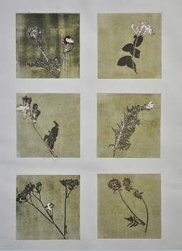 2017 fera flores I 65x85cm mono prints S