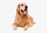1-16373_dogs-png-jpg-royalty-free-librar