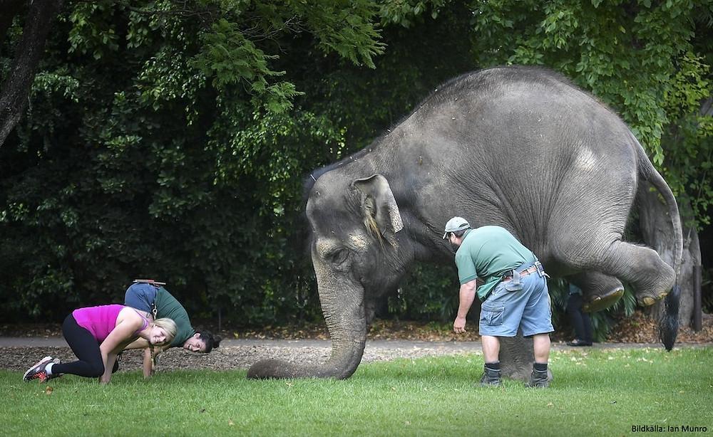 Elefantyoga elephant yoga
