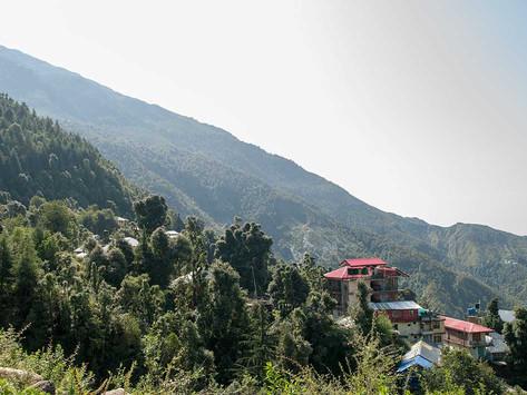 Att yoga i Himalaya bland apor, åsnor och en och en annan skorpion