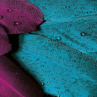 drops-feather-feathers-66875.jpg