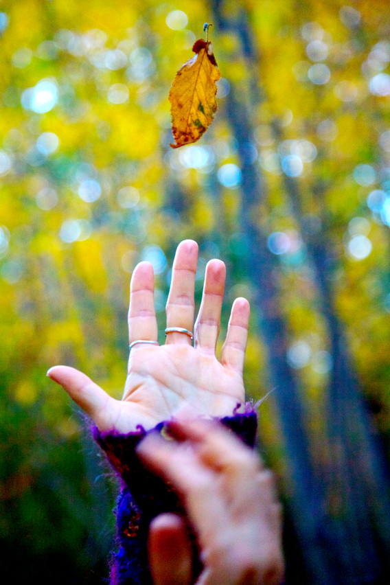 Leaf Catcher.jpg