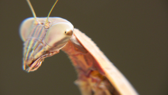 Mantis 10.jpg