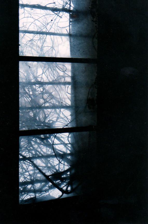 Asylum Window Vines