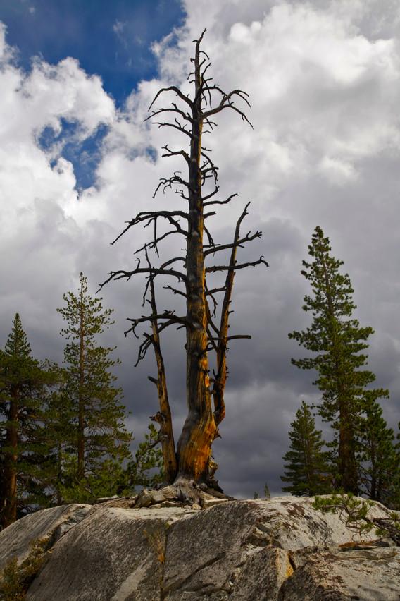 EvolutionValley_Tree_1.jpg