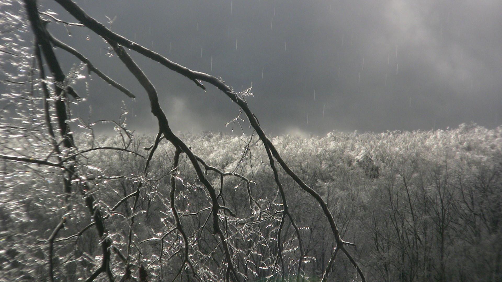 Glass Forest.jpg