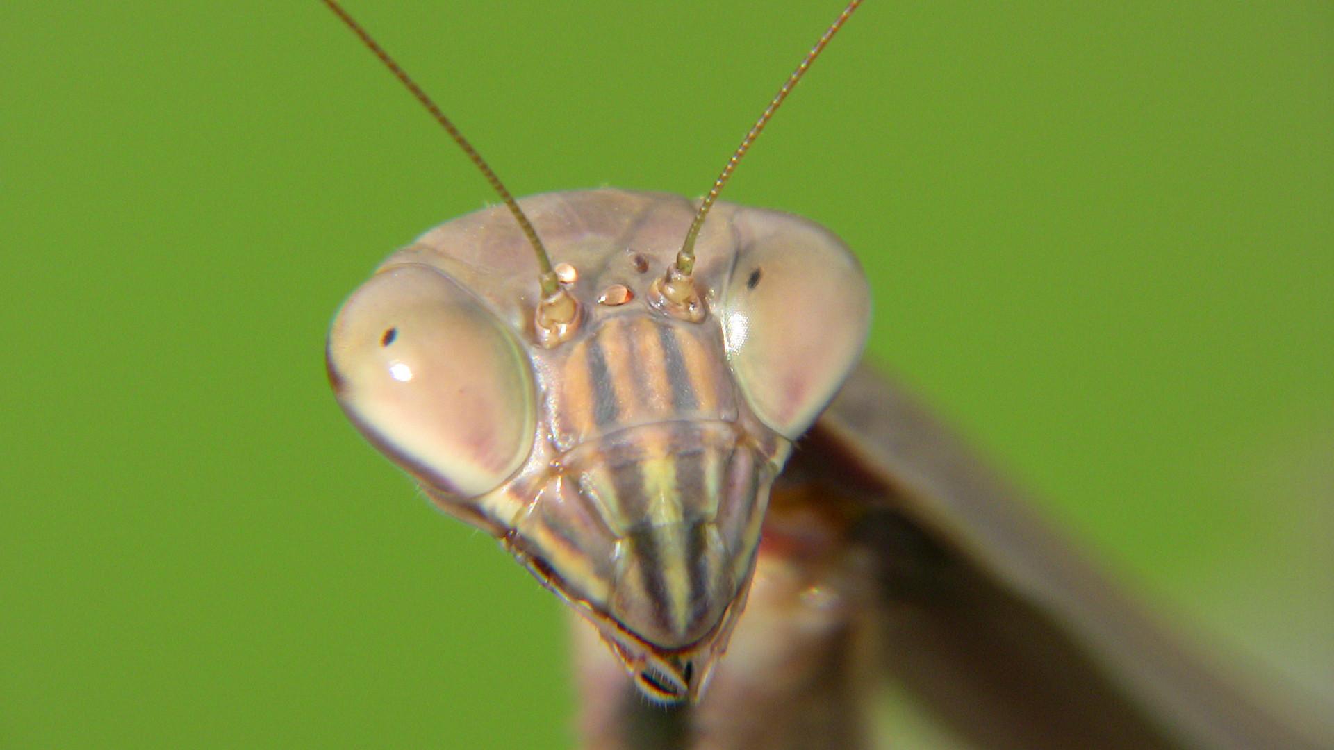Mantis 5.jpg
