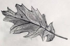 Oak Leaf Sketch.jpg