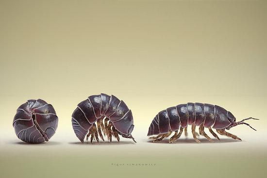 Potato-bugs