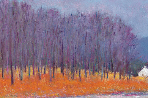 Blue Trees at the Roadside - Signed, limited edition giclee