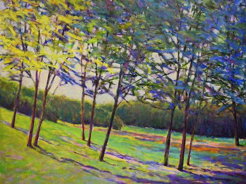 Trees in Half Shade