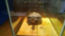 HHOA TURTLE 2.jpg