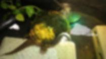 HHOA TURTLE 1.jpg