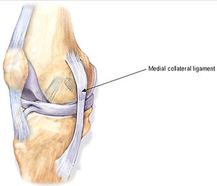 Medial Collateral Ligment