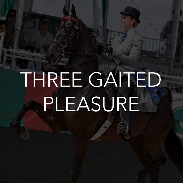 three gaited pleasure saddlebred