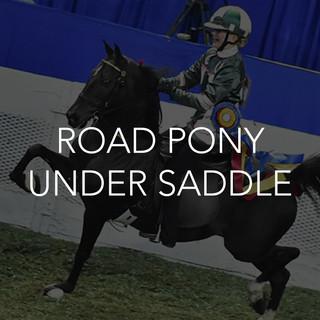 road pony under saddle