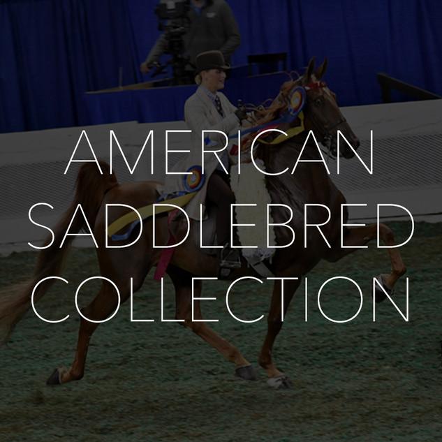 Saddlebred