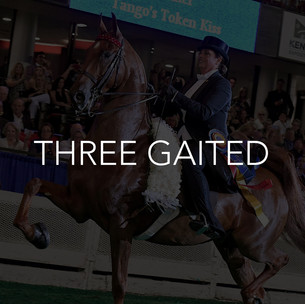three gaited saddlebred